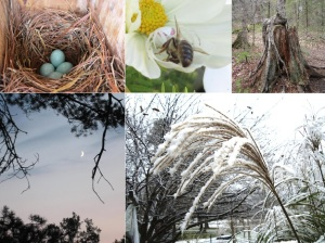 Bluebird Eggs, White Crab Spider, Crescent Moon, Stilted Roots, Grass Seed in Snow