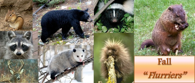 Some critters with high levels of activity during Autumn.
