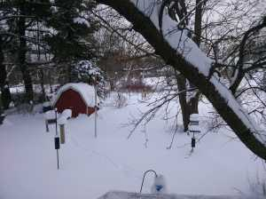 The Acre's feeding stations are enveloped after ~3 feet of lake effect snow dropped in less than 24 hours.