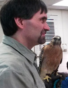 Red-shouldered Hawk with Paul