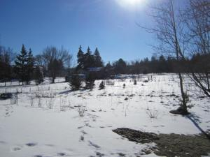 The beautiful blue sky and upper 40 temps of March 7th hinted that Spring was upon us.