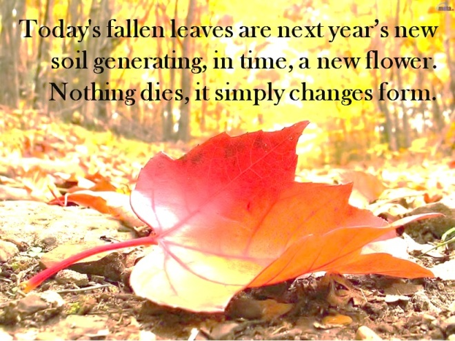 Today's fallen leaves are next year's soil generating, in time, a new flower. Nothing dies, it simply changes form.