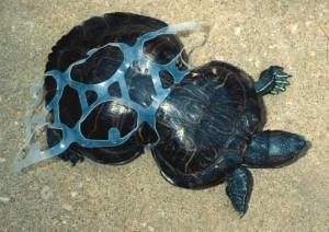 Photo courtesy of Missouri Dept. of Conservation