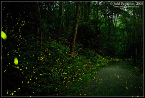 Glittering fireflies... and you thought faeries did not exist