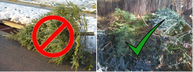 Don't toss that tree on the curb - make it work for healthier ecosystems!