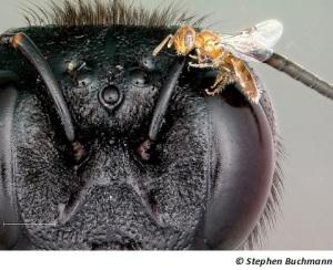 BeeSizeRange